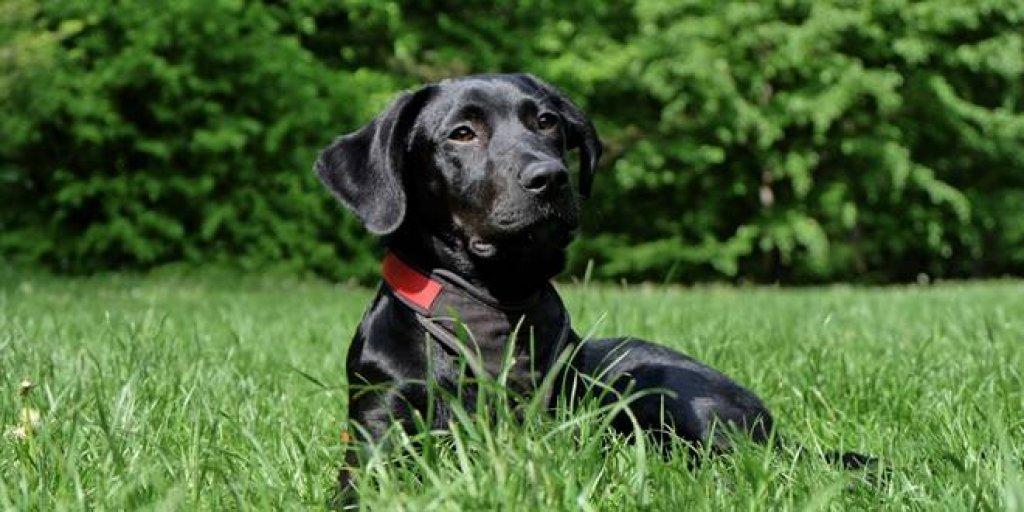 Microchipping Dog Photo