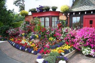 Harry Cooks Garden