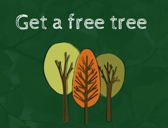Free Tree Scheme (1)