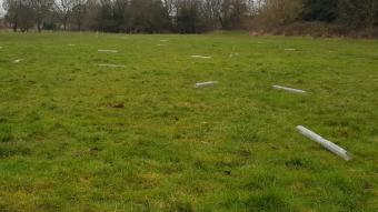 Charnwood Water - trees removed/vandalised